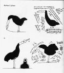 jacques-benoit-oiseau-lire.jpg